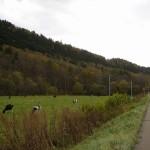 北海道にて、牛が居すぎて撮った写真はこれだけだったみたい