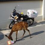 宮島にて、バイクに積んでたガイドマップ鹿に食べられた!