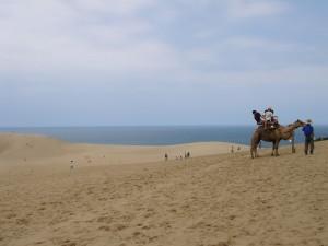 鳥取砂丘にて、日本でも砂漠でラクダに乗れるんだな
