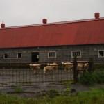 ライダーハウスが牧場だった!